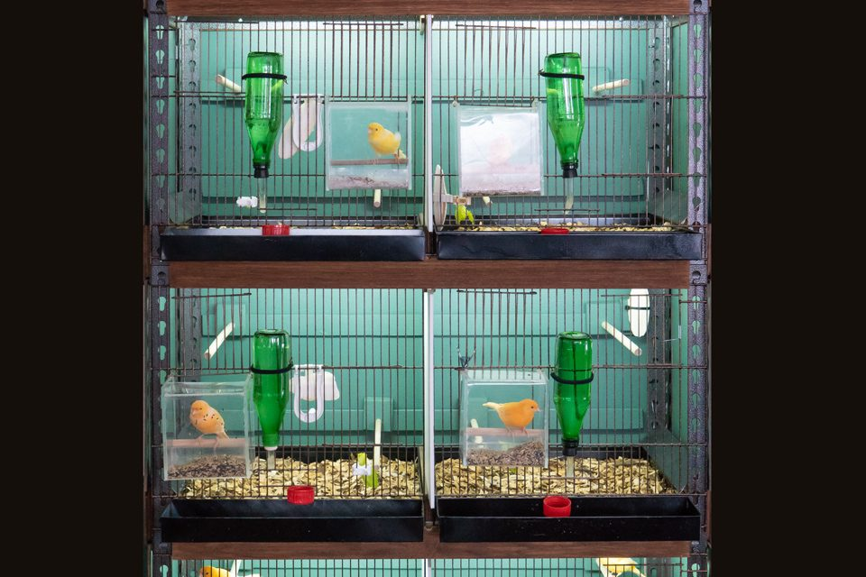 4 tiers canary cages; Built designed by Steve