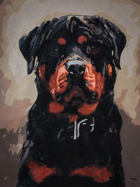 bold Rottweiler paint-by-number
